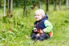 Niño rubio feliz con la carretilla de madera llena de manzanas rojas orgánicas Fotografía de archivo
