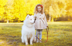 Niño soleado y perro de la foto del otoño que caminan en el parque Imagen de archivo