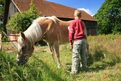Niño y caballo Haflinger fotografía de archivo libre de regalías