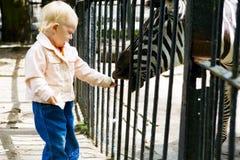 Niño y cebra Foto de archivo