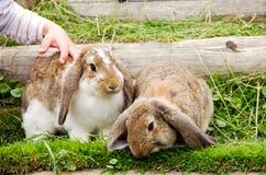Niño y conejos Foto de archivo libre de regalías