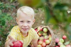Niño y manzanas en el jardín Imágenes de archivo libres de regalías