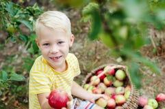 Niño y manzanas en el jardín Fotografía de archivo