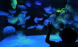 Niño y medusas Fotografía de archivo libre de regalías
