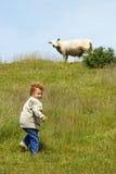 Niño y ovejas Imagenes de archivo