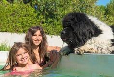 Niño y perro de Terranova en piscina Imagenes de archivo