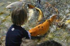 Niño y pescados Fotos de archivo