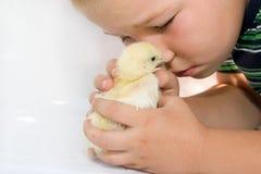 Niño y pollo Foto de archivo libre de regalías