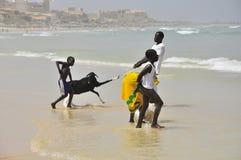 Niños africanos en la playa con la cabra Foto de archivo libre de regalías