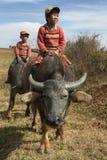 Niños birmanos en el búfalo de agua - Myanmar fotografía de archivo libre de regalías
