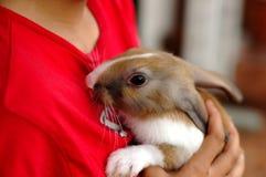 Niños con el conejo imágenes de archivo libres de regalías