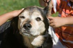 Niños con los animales domésticos imagen de archivo libre de regalías