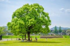Niños con sus padres que juegan debajo de árbol grande Foto de archivo