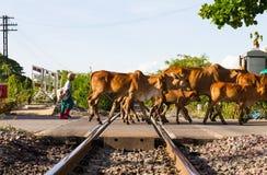 Niños del ferrocarril de los vaqueros imagenes de archivo