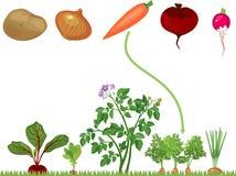 Niños educativos que hacen juego el juego para los niños Verduras en el remiendo vegetal stock de ilustración
