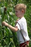 Niños en el maíz Imágenes de archivo libres de regalías