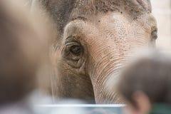 Niños en el parque zoológico Foto de archivo libre de regalías