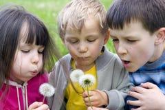 Niños en el prado fotografía de archivo