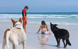 Niños jovenes que juegan en la arena mojada de la playa con los perros Foto de archivo