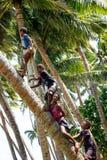 Niños locales que suben la palmera para balancear en un oscilación de la cuerda en Lavena Fotografía de archivo libre de regalías
