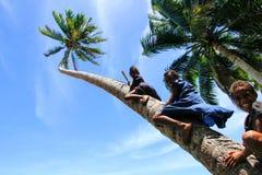 Niños locales que suben la palmera para balancear en un oscilación de la cuerda en Lavena Fotografía de archivo