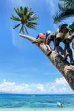 Niños locales que suben la palmera para balancear en un oscilación de la cuerda en Lavena Fotos de archivo libres de regalías