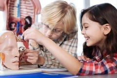 Niños positivos de acoplamiento que examinan el modelo del cuerpo humano Fotos de archivo
