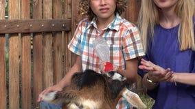 Niños que alimentan la cabra en la granja almacen de metraje de vídeo