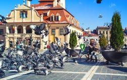 Niños que alimentan palomas en una plaza principal de la ciudad rumana Braso Imagen de archivo libre de regalías