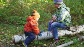 Niños que balancean en un árbol caido en el parque metrajes