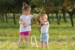 Niños que escogen la cereza Imágenes de archivo libres de regalías