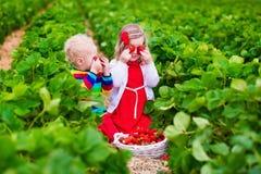 Niños que escogen la fresa en un campo de granja Fotografía de archivo