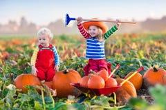 Niños que escogen las calabazas en remiendo de la calabaza de Halloween Imagen de archivo libre de regalías
