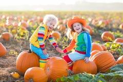 Niños que escogen las calabazas en remiendo de la calabaza de Halloween fotos de archivo libres de regalías