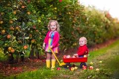 Niños que escogen manzanas del árbol Foto de archivo