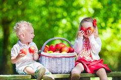 Niños que escogen manzanas frescas imagenes de archivo