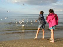 Niños que introducen gaviotas Foto de archivo