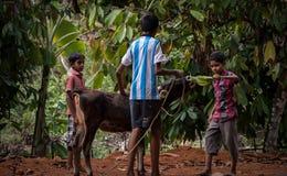 Niños que juegan con el becerro en pueblo imágenes de archivo libres de regalías