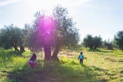 Niños que juegan en el campo Fotos de archivo