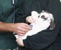 Niños que llevan el conejo enfermo el veterinario Imagen de archivo libre de regalías