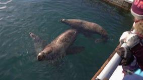 Niños que miran para la natación septentrional del león marino de los animales salvajes del grupo en el océano almacen de video