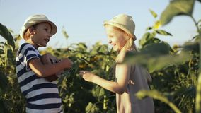 Niños que se divierten en el campo con los girasoles El muchacho feliz juega el ukelele almacen de video