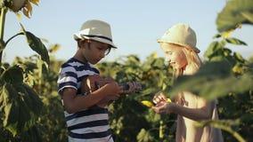 Niños que se divierten en el campo con los girasoles en el verano metrajes