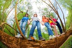 Niños que se unen en tronco del árbol caido Foto de archivo