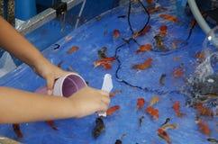 Niños tailandeses asiáticos que juegan el juego del pez de colores o el scoo del papel que saca con pala fotos de archivo