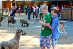 Niños y animales del campo en parque zoológico Fotografía de archivo libre de regalías