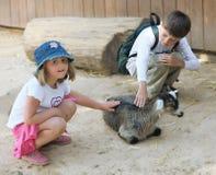 Niños y animales en el parque zoológico Foto de archivo libre de regalías