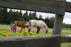Niños y caballos Fotografía de archivo libre de regalías