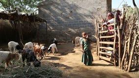 Niños y mujer en patio trasero con los animales del campo en Jodhpur metrajes