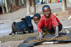 Niños y vaca africanos pobres de trabajo Imágenes de archivo libres de regalías